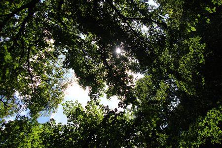 sunshining_R.jpg